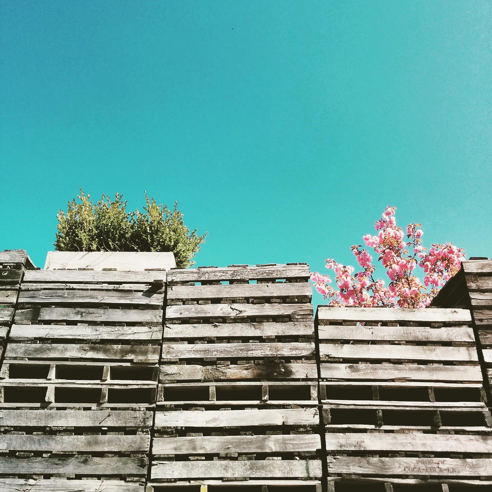 LENS DRIFT PHOTOGRAPHY      |      JUSTINE BETH KAY